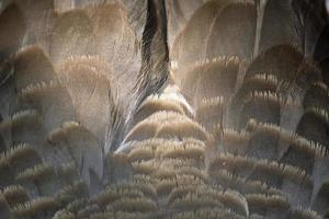 Gänsefedern Hintergrund foto