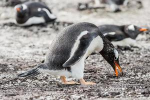 Pinguine in der Antarktis foto