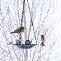 Vögel an einem Futterautomaten im Winter foto