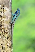 blaue Eidechse sieht aus wie kleines Reptil mit schönen Details foto