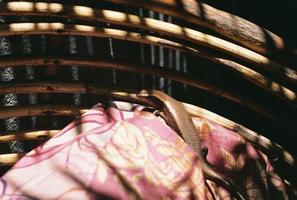 Eidechse in der Sonne foto