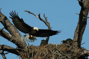 das Nest reparieren foto