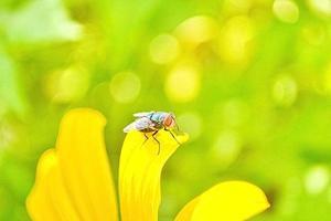 grüne Fliege auf der Blume foto