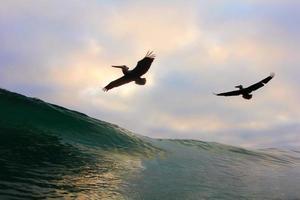 Pelikane fliegen über eine Welle foto