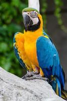 Papagei foto