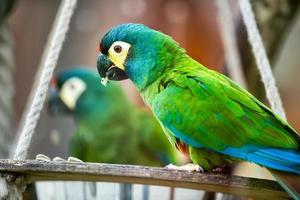 schöner Papagei foto