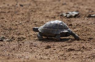 Schildkröte foto