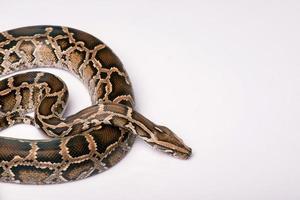 Reptilien auf weißem Hintergrund
