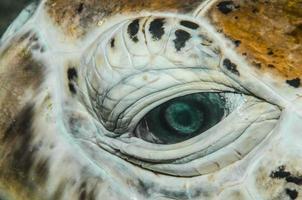 Auge foto