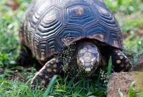 Schildkröten essen foto
