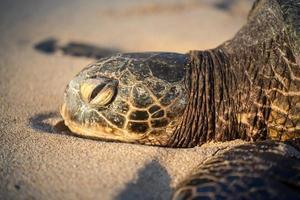 Schildkröte, die im Ozean schwimmt foto
