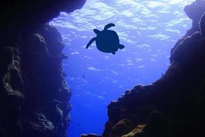 Meeresschildkröte Silhouette foto