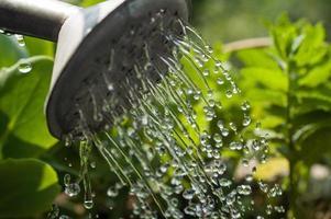 Wassertropfen aus der Gießkanne foto