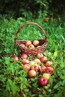 Apfel. foto