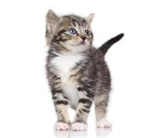 Kätzchen auf weißem Hintergrund foto