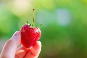 Erdbeere halten