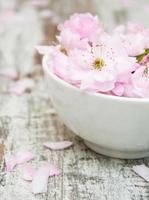 Blüten von Sakura blüht in einer Schüssel mit Wasser foto
