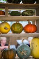 Zusammensetzung von Kürbiskürbis und Melone auf natürlichem Hintergrund foto