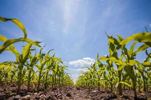 ländliche Sommerlandschaft mit Feldern foto