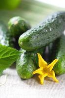 Gurken für Ihre gesunde Ernährung foto