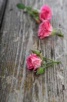 Strauß rosa Rosen