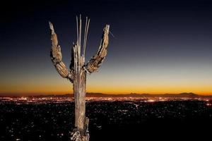 Saguaro Knochen und Tucson Stadt Lichter foto