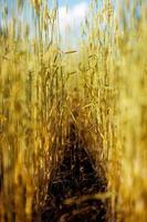 Anzahl Getreide