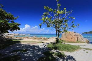 Koh Tao Insel