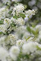 Frühlingsblüten foto