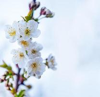 Frühlingsbaum foto