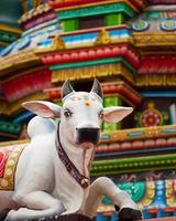 heilige hinduistische Kuhstatue foto