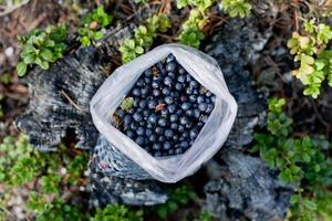 Tasche voller Blaubeeren foto