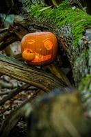 Kürbis im Wald foto