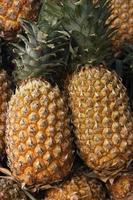 Ananas (Ananas) ist der gebräuchliche Name für einen essbaren tropischen Plan foto