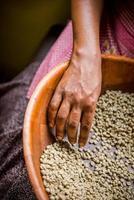 grüne Kaffeebohnen und Hand foto