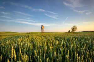 grüne Landschaft foto
