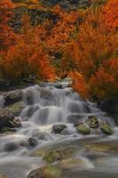der Herbst foto