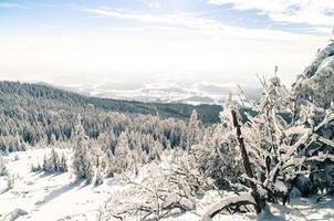 gefrorener Winter foto