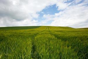 Landwirtschaftslandschaft foto