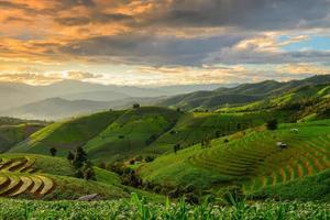 terrassenförmig angelegter Reis und Landschaft Chiang Mai