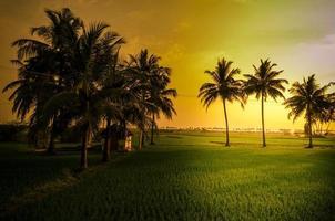 Sonnenuntergang im indischen Dorf foto