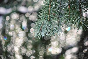 Winterzweig Hintergrund foto