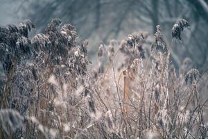 Schnee und Winter. Weißrussland Dorf, Landschaft im Winter