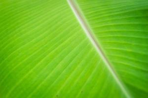 Bananenblatt foto
