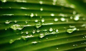grünes Blatt mit Wassertropfen foto