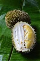 Durian foto