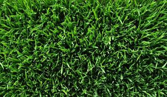 Hintergrund eines grünen Grases foto