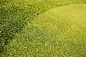 grüner Grashintergrund xxl foto