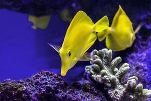 Fische schwimmen mit Corral foto