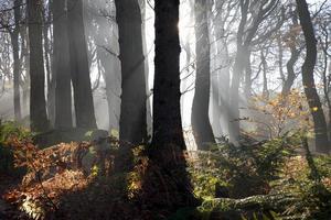 neblige Wälder